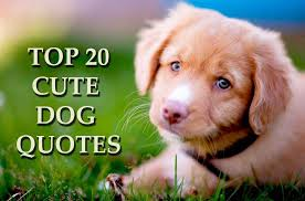 cute dog quotes and sayings. Fine Sayings Top 20 Cute Dog Quotes And Sayings Throughout