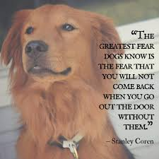 Download Good Quote About Dog