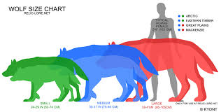 Wolf Species Size Chart 79 Bright Wolf Height And Weight Chart