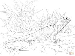 Small Picture Common Collared Lizard coloring page Free Printable Coloring Pages