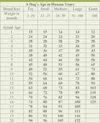 Medium Dog Age Chart 27 Reasonable Purina Dog Age Chart