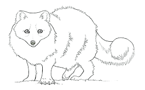 Coloring Pages Arctic Fox Coloring Page Pages Free Animal Jam