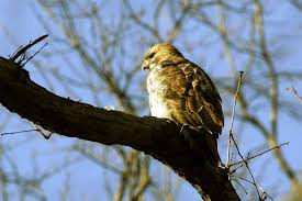 Odds Are A Hawk Wont Steal Your Pet But You Should Still