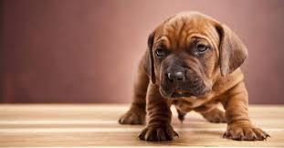 Das landgericht koblenz meint, der mieter dürfe den hund nur in räume lassen, in denen kein parkett liegt, oder das dagegen meint das amtsgericht köpenick: Diesen Fussboden Sollten Hundebesitzer Haben Aus Liebe Zum Haustier