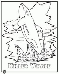 Small Picture Killer Whale Orca Coloring Page Animals Town Animals Color