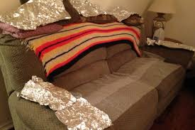 Aluminum Foil and Bubble Wrap Can Keep a Dog f the Furniture
