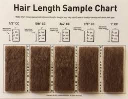 Comb Chart Clip Comb Sample Chart For Grooming