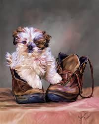 pet portraits dog