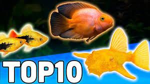 petsmart animals fish.  Petsmart Top 10 Petsmart Fish For Animals M