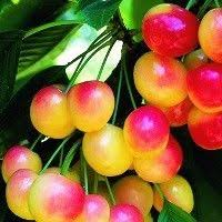 9 Best Trees In Our Yard Images On Pinterest  Fruit Trees Exotic Full Size Fruit Trees For Sale
