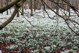 「イギリス 春」の画像検索結果