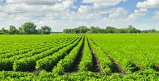 Image result for Different Benefits Of Biofertilizers