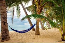 Cool Hammock Wallpapers Tagged With Hammock Palm Summer Hammock Beach Vacation