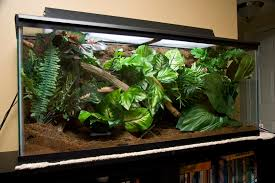 crested gecko enclosure