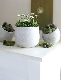 cement plant pots whitewashed cement plant pots cement plant pots diy