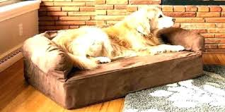 best couches for dogs good couches best leather for dogs couch dog owners sectional new sofa