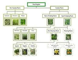 Plant Kingdom Classification Chart For Kids Montessori Plant Kingdom Chart Plant Classification