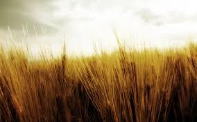 dry grass field background. 1920x1200 Wallpaper Grass, Dry, Field, Sky, Autumn Dry Grass Field Background L