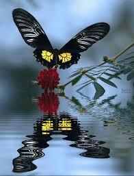 superbes papillons! Images?q=tbn:ANd9GcSYLFrTsOM0GP6iTYpvxnxOrVOB3B3CS0TxX9vAnwfMRYpal_a6