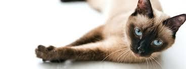 k d cat food alternative. Contemporary Alternative Kd Cat Food Alternatives Taking It Easy Hills  And K D Cat Food Alternative