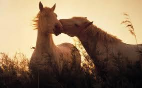 Wallpapers For Pinto Horse Wallpaper Desktop Horses In