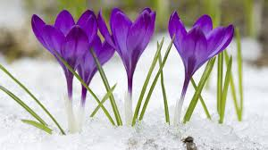 Image result for spring/winter pictures