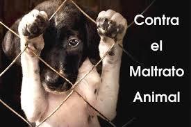 Resultado de imagen para imagenes de campañas contra el maltrato animal