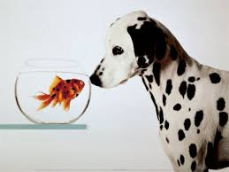 Image result for Pet and fish