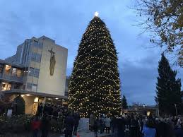 Napa Christmas Tree Lighting Queen Of The Valley Celebrates Christmas With Annual