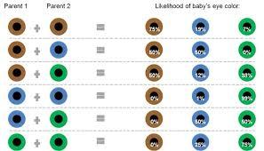 Baby Eye Chart Calculator The Likelihood Of A Babys Eye Color Based On Their Parents