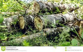 Walking Logs Logs Stock Image Image Of Circles Circle Wooden Shape 117585871
