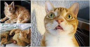 8 fun facts about ginger tabby cats
