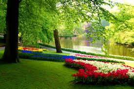 Image result for images of beautiful flowers, grass and trees
