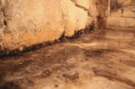 basement top how to remove mold from basement concrete walls home design great creative in
