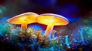 Fantasy Glowing Mushrooms in mystery ...
