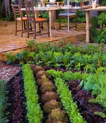 Brilliant Vegetable Gardening For Ners 17 Best Ideas
