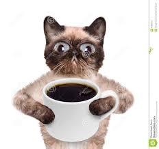 Bildresultat för kaffekatt
