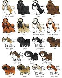 Great Color And Pattern Chart For Shih Tzu Shih Tzu Dog