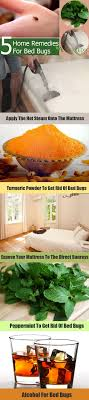 25+ unique Bed bug remedies ideas on Pinterest   Bed bug control ...