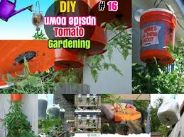16 diy growing tomatoes how to grow tomatoes upside down in containers