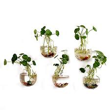 5 packs wall hanging planters glass plant pots water plant containers glass flower pots wall hanging