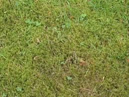 Greenkeepers Secrets The Best Way To Kill Lawn Moss Just
