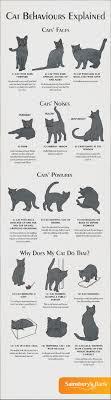 Cat Body Language Chart Cat Body Language Cats Funny Cats Pets