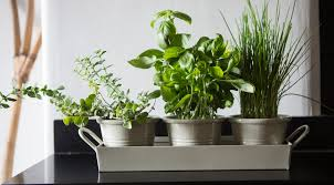 Set of 3 Enamel Herb Pots on a Tray