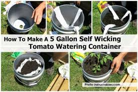 how to make a 5 gallon self wicking tomato watering container included