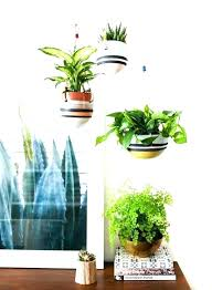 Small plant for office desk Workplace Small Plants For Office Good Office Plants Indoor Plants Table Good Indoor Plants For Office Desk Good Small Plants For Good Office Plants Easy Small Office Nutritionfood Small Plants For Office Good Office Plants Indoor Plants Table Good