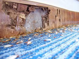 termite damage repairs in los angeles
