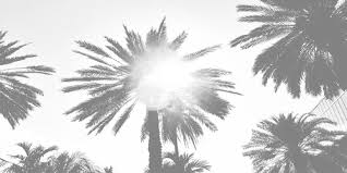 Palm trees tumblr header Pinterest Packs Loadtve Pictures Of Black And White Tumblr Header rockcafe
