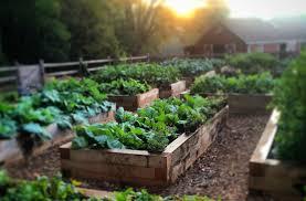 gardenfarm raised beds