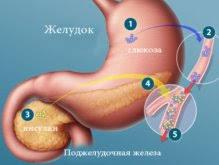 Глюкоза и инсулин Роль в углеводном обмене организма ru Роль глюкозы и инсулина в углеводном обмене